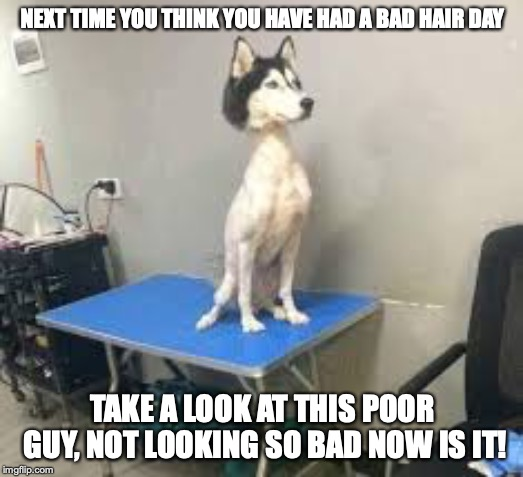 I told him not to roll around in the back yard in spring | NEXT TIME YOU THINK YOU HAVE HAD A BAD HAIR DAY TAKE A LOOK AT THIS POOR GUY, NOT LOOKING SO BAD NOW IS IT! | image tagged in dogs,dog,funny,dog week,poor boy,bad dog | made w/ Imgflip meme maker