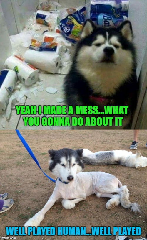 Doggo Week March 10-16 a Blaze_the_Blaziken and 1forpeace Event | YEAH I MADE A MESS...WHAT YOU GONNA DO ABOUT IT WELL PLAYED HUMAN...WELL PLAYED | image tagged in well played,memes,dogs,funny,doggo week,payback | made w/ Imgflip meme maker