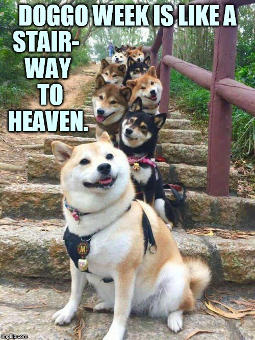 Doggo Week March 10-16 a Blaze_the_Blaziken and 1forpeace Event | DOGGO WEEK IS LIKE A STAIR- WAY  TO HEAVEN. | image tagged in memes,doggo week,like,stairway to heaven,1forpeace,blaze the blaziken | made w/ Imgflip meme maker