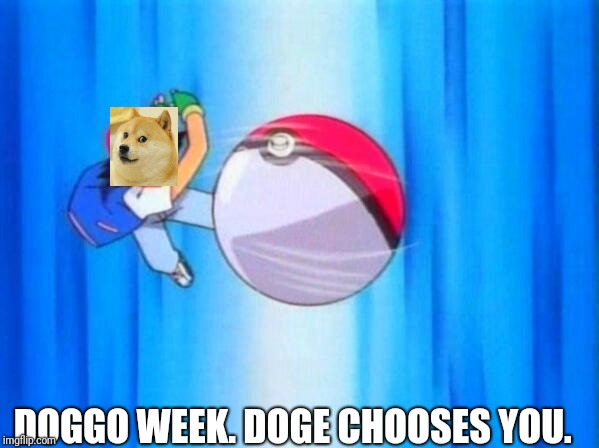 Let's go make some dog memes!  (Doggo week, a 1forpeace and Blaze_the_Blaziken event)  | DOGGO WEEK. DOGE CHOOSES YOU. | image tagged in i choose you,doggo week,memes | made w/ Imgflip meme maker