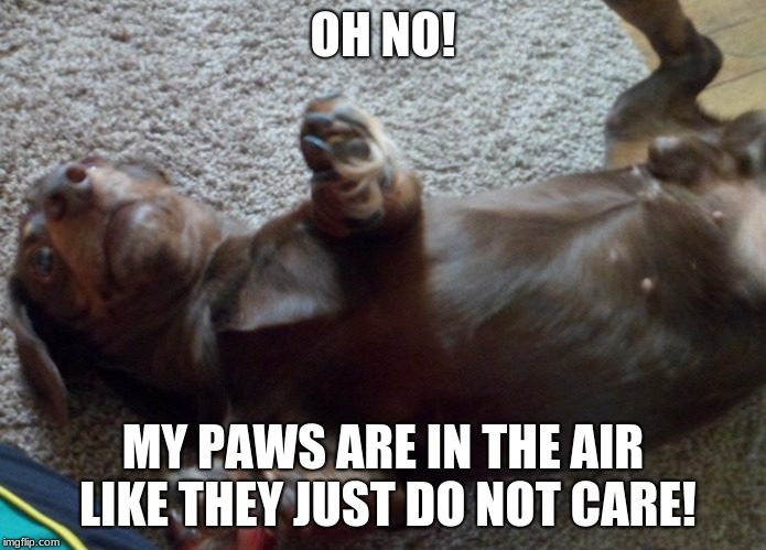 reach for the sky | OH NO! MY PAWS ARE IN THE AIR LIKE THEY JUST DO NOT CARE! | image tagged in cute dog | made w/ Imgflip meme maker