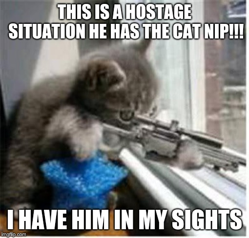 cats with guns | THIS IS A HOSTAGE SITUATION HE HAS THE CAT NIP!!! I HAVE HIM IN MY SIGHTS | image tagged in cats with guns | made w/ Imgflip meme maker