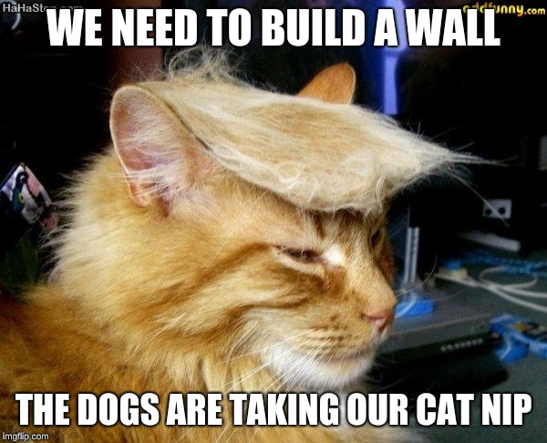 donald trump cat |  WE NEED TO BUILD A WALL; THE DOGS ARE TAKING OUR CAT NIP | image tagged in donald trump cat | made w/ Imgflip meme maker