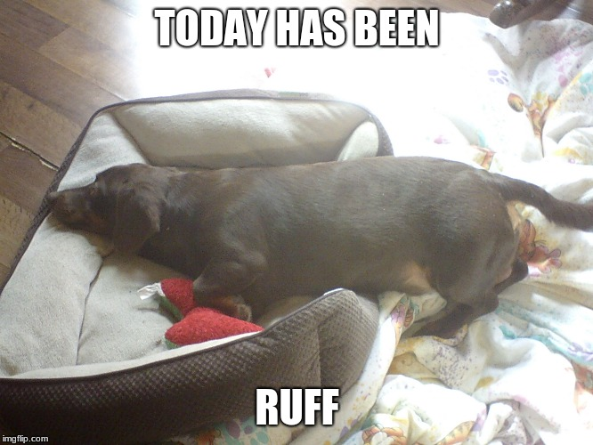 The Ruffest day of all | TODAY HAS BEEN RUFF | image tagged in bad pun dog,dachshund | made w/ Imgflip meme maker