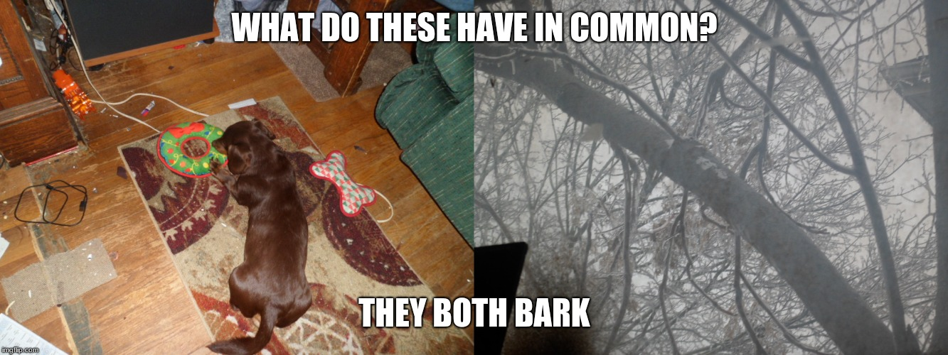 Bark | WHAT DO THESE HAVE IN COMMON? THEY BOTH BARK | image tagged in bad pun dog,dachshund,tree | made w/ Imgflip meme maker