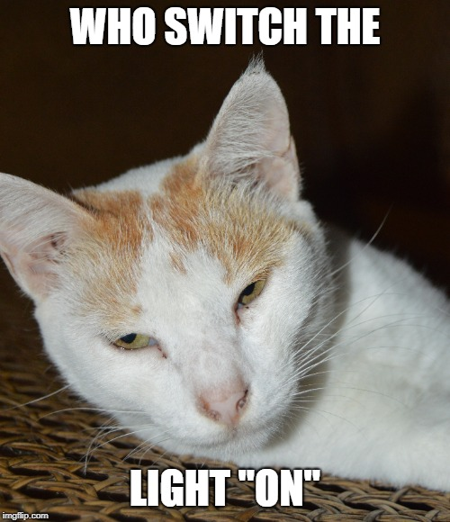 "lazy kitty | WHO SWITCH THE LIGHT ""ON"" 