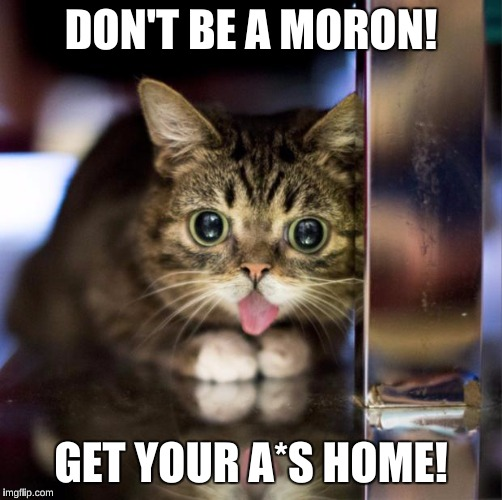 Lil Bub |  DON'T BE A MORON! GET YOUR A*S HOME! | image tagged in lil bub | made w/ Imgflip meme maker