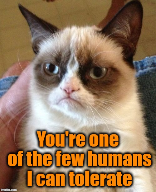 Grumpy Cat Meme | You're one of the few humans I can tolerate | image tagged in memes,grumpy cat | made w/ Imgflip meme maker