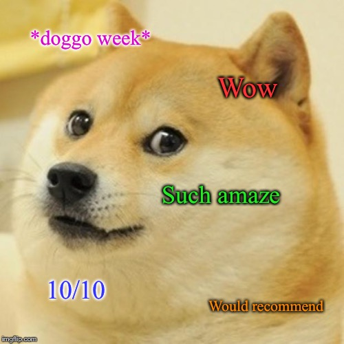Guess it really /is/ amaze! Doggo Week! March 10-16 a Blaze_the_Blaziken and 1forpeace Event! | *doggo week* Wow Such amaze 10/10 Would recommend | image tagged in memes,doge,doggo,doggo week,masqurade_ | made w/ Imgflip meme maker