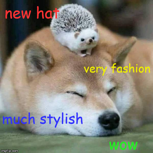 so vogue | new hat wow very fashion much stylish | image tagged in doggo week,hedgehog,hat | made w/ Imgflip meme maker