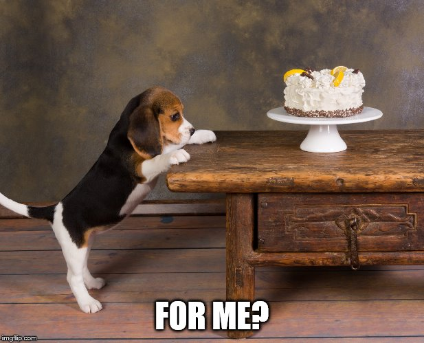 For me? |  FOR ME? | image tagged in beagle,meme,doggo,doggo week,cute,puppy | made w/ Imgflip meme maker
