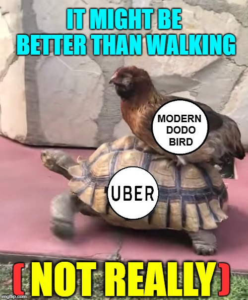You Too Can Become Extinct  | MODERN DODO  BIRD IT MIGHT BE BETTER THAN WALKING NOT REALLY (                           ) | image tagged in vince vance,lyft,uber,taxicab,dodo bird,turtles | made w/ Imgflip meme maker