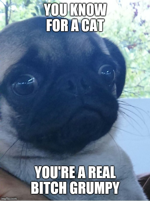 scared dog | YOU KNOW FOR A CAT YOU'RE A REAL B**CH GRUMPY | image tagged in scared dog | made w/ Imgflip meme maker