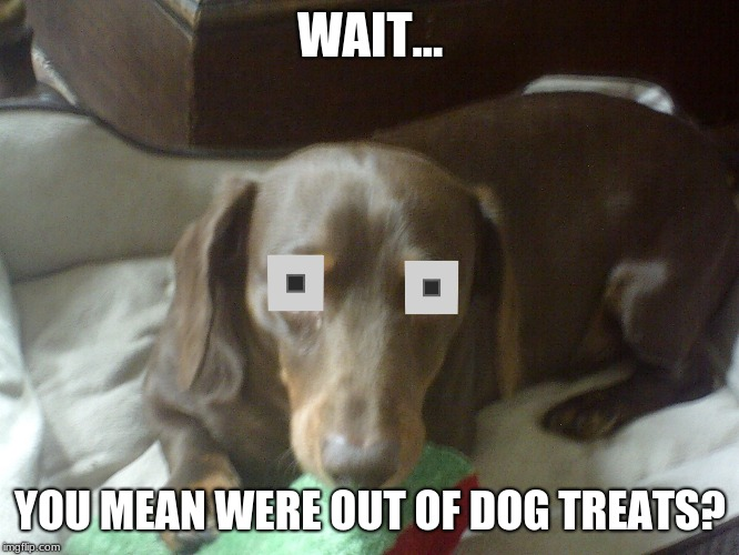WHAT!? |  WAIT... YOU MEAN WERE OUT OF DOG TREATS? | image tagged in dog,treats | made w/ Imgflip meme maker