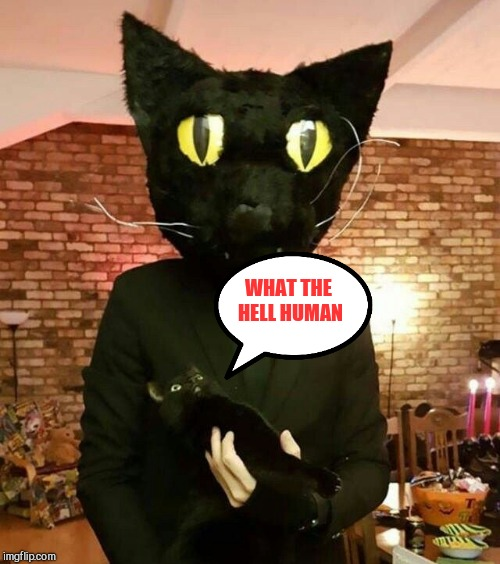 WHAT THE HELL HUMAN | image tagged in black cat | made w/ Imgflip meme maker