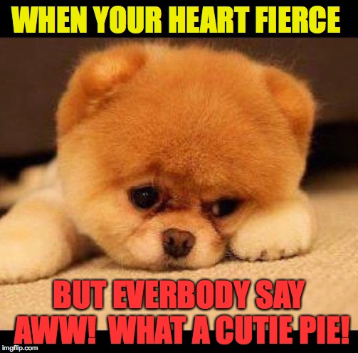 You wouldn't like me when I'm angry. You'd wuv me. | WHEN YOUR HEART FIERCE BUT EVERBODY SAY AWW!  WHAT A CUTIE PIE! | image tagged in sad dog,memes,cutie pie,fierce | made w/ Imgflip meme maker