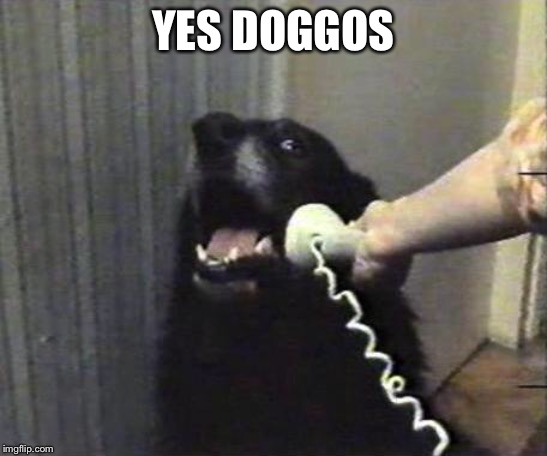 Yes this is dog | YES DOGGOS | image tagged in yes this is dog | made w/ Imgflip meme maker