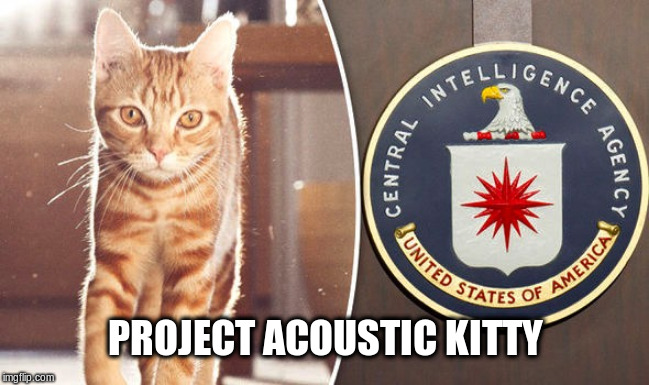 Project Acoustic Kitty | PROJECT ACOUSTIC KITTY | image tagged in cia,cia project,government,political meme,cat memes | made w/ Imgflip meme maker