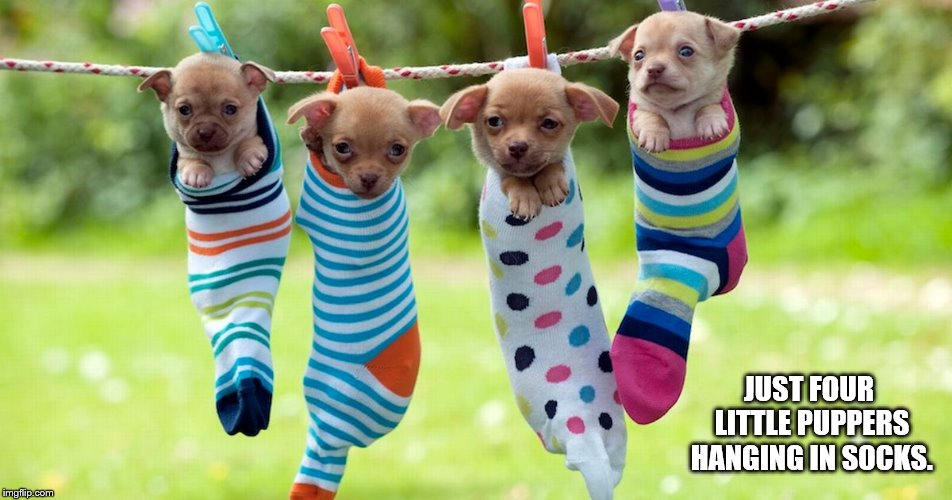 Just four little puppers hanging in socks. |  JUST FOUR LITTLE PUPPERS HANGING IN SOCKS. | image tagged in puppies,cute,doggo week,doggo,meme,pupper | made w/ Imgflip meme maker