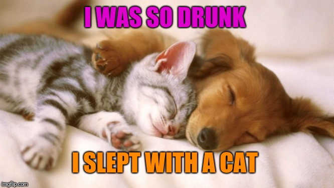 cats and dogs sleeping together | I WAS SO DRUNK I SLEPT WITH A CAT | image tagged in cats and dogs sleeping together | made w/ Imgflip meme maker