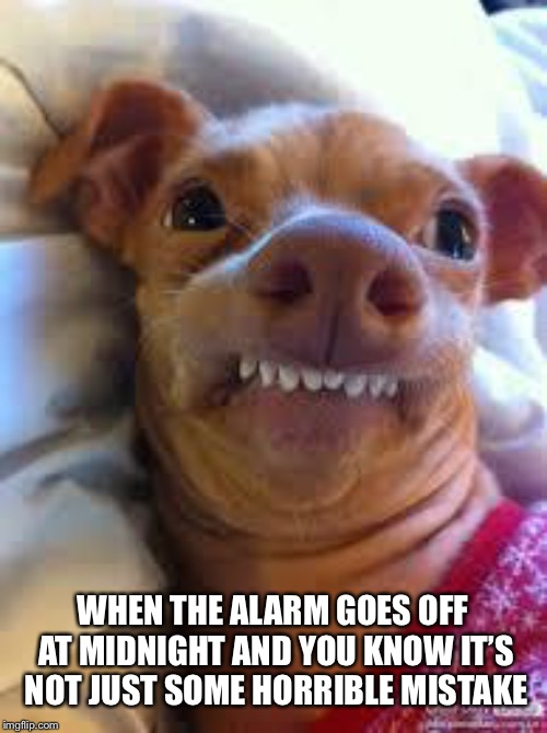 For real | WHEN THE ALARM GOES OFF AT MIDNIGHT AND YOU KNOW IT'S NOT JUST SOME HORRIBLE MISTAKE | image tagged in teeth dog | made w/ Imgflip meme maker