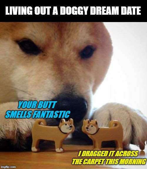 Dream Date (Doggo Week March 10-16 a Blaze_the_Blaziken and 1forpeace Event) | YOUR BUTT SMELLS FANTASTIC I DRAGGED IT ACROSS THE CARPET THIS MORNING LIVING OUT A DOGGY DREAM DATE | image tagged in dog now kiss,memes,dogs,butt sniffing,doggo week,funny | made w/ Imgflip meme maker