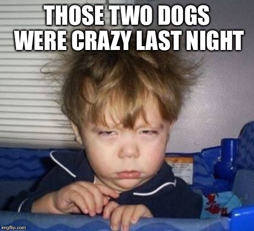 Wake up | THOSE TWO DOGS WERE CRAZY LAST NIGHT | image tagged in wake up | made w/ Imgflip meme maker