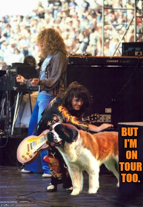 Doggo Week March 10-16 a Blaze_the_Blaziken and 1forpeace Event | BUT I'M  ON TOUR TOO. | image tagged in memes,doggo week,robert plant,jimmy page,tour,cool dog | made w/ Imgflip meme maker