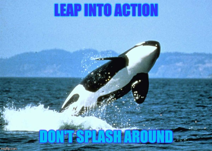 LEAP INTO ACTION DON'T SPLASH AROUND | image tagged in harley exteriors bite of seattle orca whale watching ticket | made w/ Imgflip meme maker