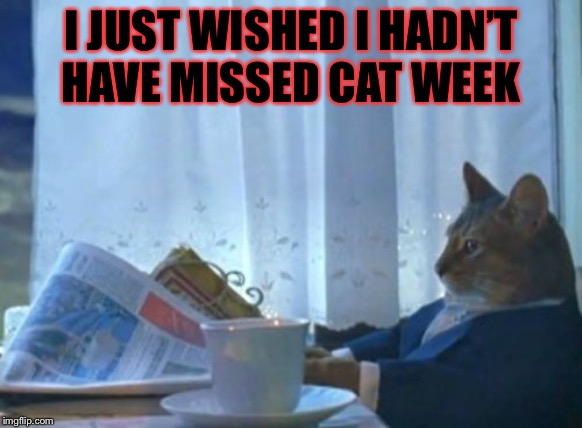 I Should Buy A Boat Cat Meme | I JUST WISHED I HADN'T HAVE MISSED CAT WEEK | image tagged in memes,i should buy a boat cat | made w/ Imgflip meme maker
