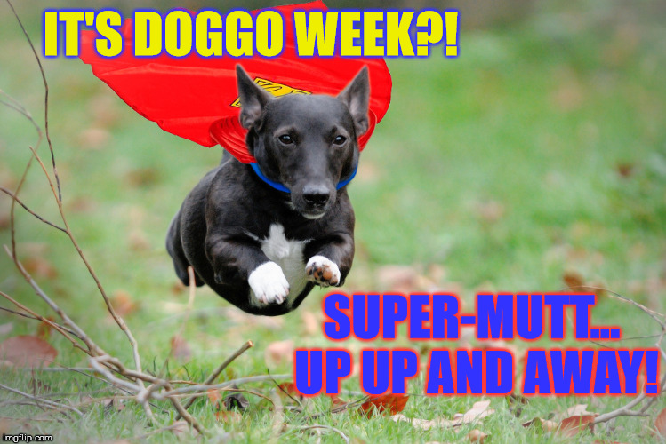 My first take at Doggo Week March 10-16 a Blaze_the_Blaziken and 1forpeace Event | IT'S DOGGO WEEK?! SUPER-MUTT... UP UP AND AWAY! | image tagged in memes,funny,dogs,doggo week,flying dog,superhero | made w/ Imgflip meme maker