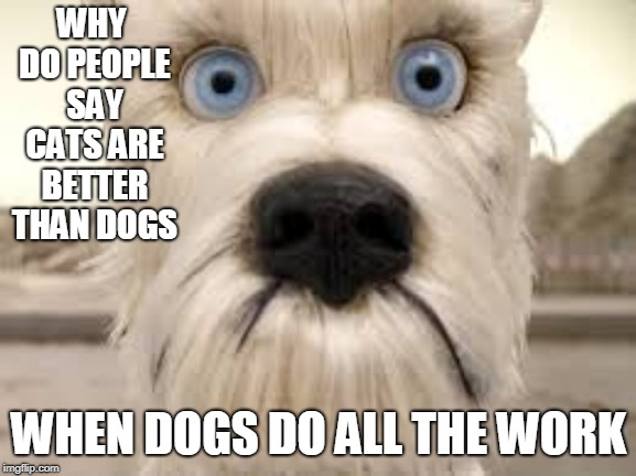 sad dog wants respect | WHY DO PEOPLE SAY CATS ARE BETTER THAN DOGS WHEN DOGS DO ALL THE WORK | image tagged in dog | made w/ Imgflip meme maker
