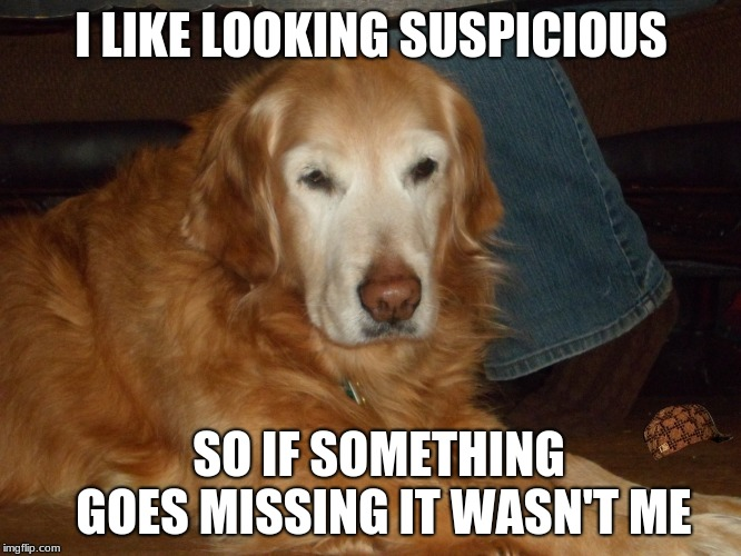 golden retriever | I LIKE LOOKING SUSPICIOUS SO IF SOMETHING GOES MISSING IT WASN'T ME | image tagged in golden retriever | made w/ Imgflip meme maker