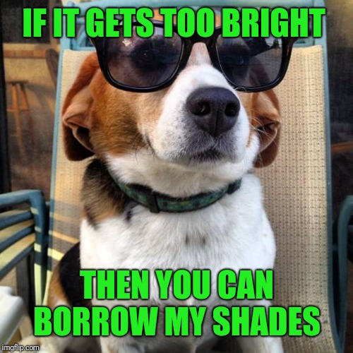 beagle sunglasses | IF IT GETS TOO BRIGHT THEN YOU CAN BORROW MY SHADES | image tagged in beagle sunglasses | made w/ Imgflip meme maker