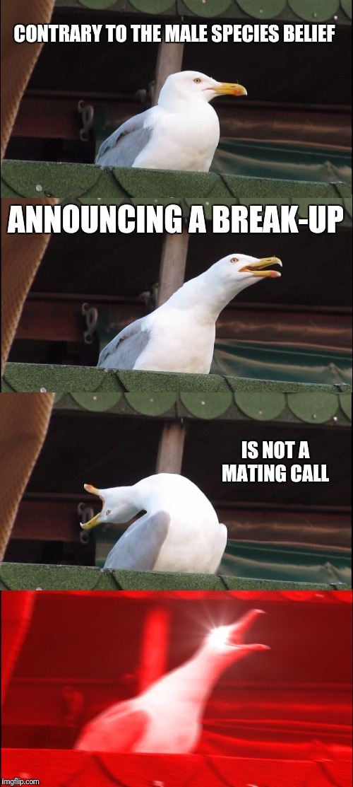 Inhaling Seagull Meme | CONTRARY TO THE MALE SPECIES BELIEF ANNOUNCING A BREAK-UP IS NOT A MATING CALL | image tagged in memes,inhaling seagull | made w/ Imgflip meme maker