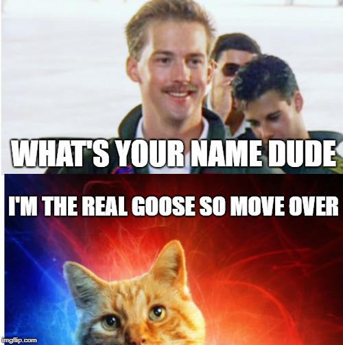 Goose Cat | WHAT'S YOUR NAME DUDE I'M THE REAL GOOSE SO MOVE OVER | image tagged in captain marvel,goose,cat | made w/ Imgflip meme maker