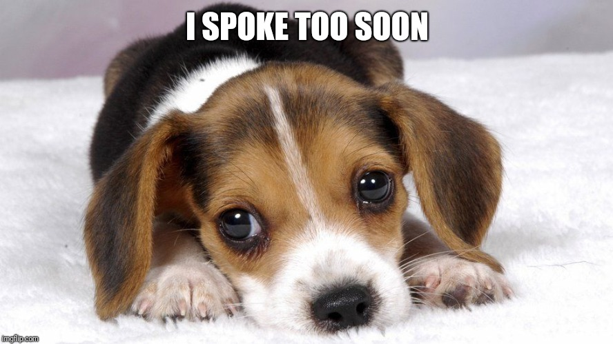 Puppy dog eyes | I SPOKE TOO SOON | image tagged in puppy dog eyes | made w/ Imgflip meme maker