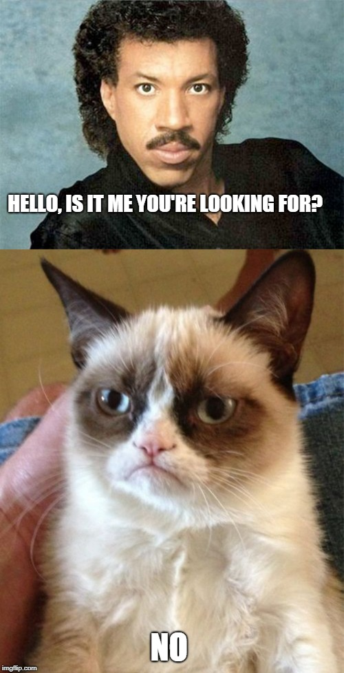 Lionel Richie Put in his Place by Grumpy Cat | HELLO, IS IT ME YOU'RE LOOKING FOR? NO | image tagged in memes,grumpy cat,lionel richie | made w/ Imgflip meme maker