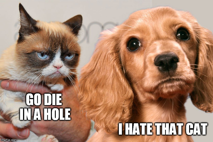 GO DIE IN A HOLE I HATE THAT CAT | made w/ Imgflip meme maker