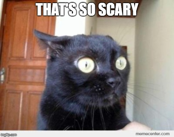 Scared Cat | THAT'S SO SCARY | image tagged in scared cat | made w/ Imgflip meme maker