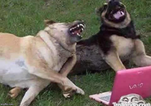 Dogs Laughing | . | image tagged in dogs laughing | made w/ Imgflip meme maker