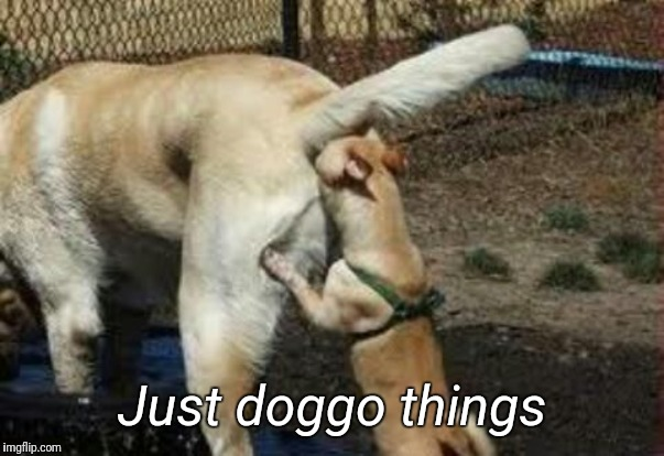 Brown noser | Just doggo things | image tagged in brown noser | made w/ Imgflip meme maker