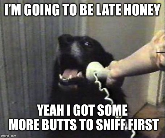 Yes this is dog | I'M GOING TO BE LATE HONEY YEAH I GOT SOME MORE BUTTS TO SNIFF FIRST | image tagged in yes this is dog | made w/ Imgflip meme maker