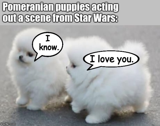 adorable Han and Leia  | Pomeranian puppies acting out a scene from Star Wars: I love you. I know. | image tagged in memes,cute puppies,puppies,dogs | made w/ Imgflip meme maker
