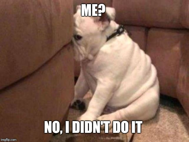 Guilty dog | ME? NO, I DIDN'T DO IT | image tagged in guilty dog | made w/ Imgflip meme maker