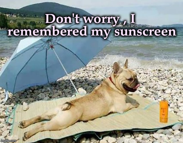 Doggo week : Equal rights for Dogs | Don't worry , I remembered my sunscreen | image tagged in doggo week,just chillin',protection,furry,swimsuit | made w/ Imgflip meme maker