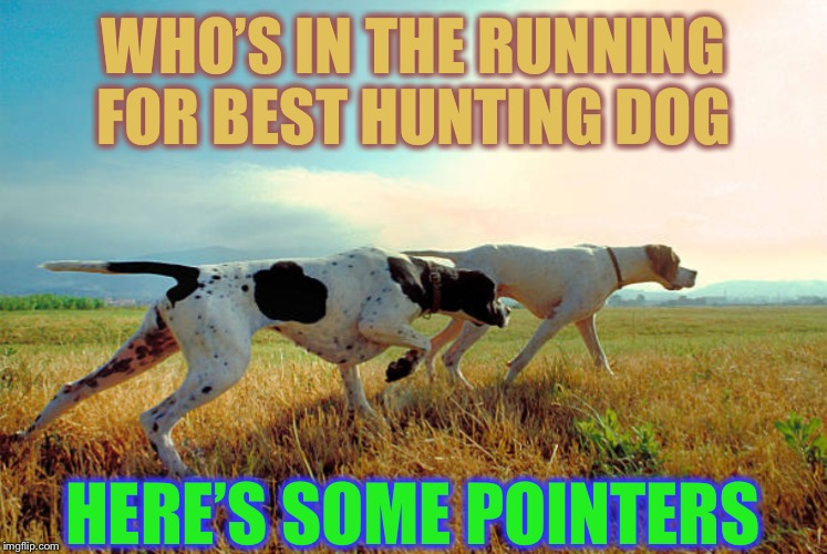 Doggo Week (March 10-16, a Blaze_the_Blaziken and 1forpeace event)  Leading the way ! | WHO'S IN THE RUNNING FOR BEST HUNTING DOG HERE'S SOME POINTERS | image tagged in pointer dog,hunting,doggo week | made w/ Imgflip meme maker