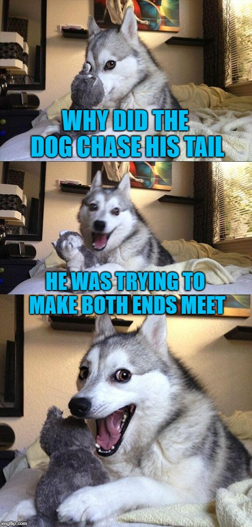 Really, Really Bad Pun Dog (Doggo Week March 10-16 a Blaze_the_Blaziken and 1forpeace Event) | WHY DID THE DOG CHASE HIS TAIL HE WAS TRYING TO MAKE BOTH ENDS MEET | image tagged in memes,bad pun dog,dog,doggo week,tail,pun | made w/ Imgflip meme maker