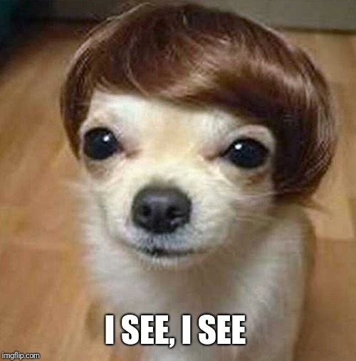 dog wig | I SEE, I SEE | image tagged in dog wig | made w/ Imgflip meme maker
