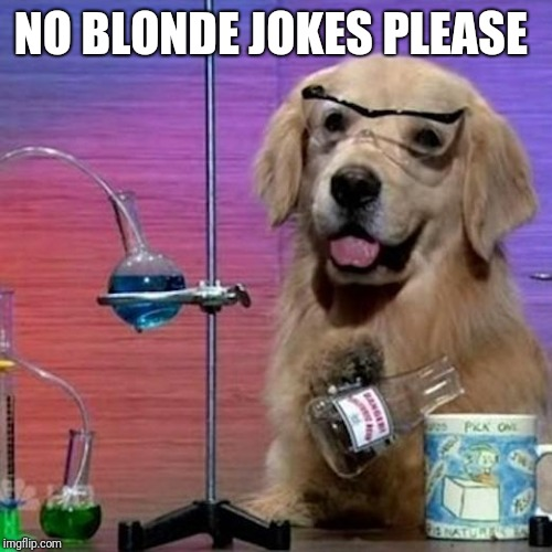 I Have No Idea What I Am Doing Dog | NO BLONDE JOKES PLEASE | image tagged in memes,i have no idea what i am doing dog | made w/ Imgflip meme maker